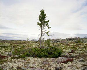 spruce_0909_6b37